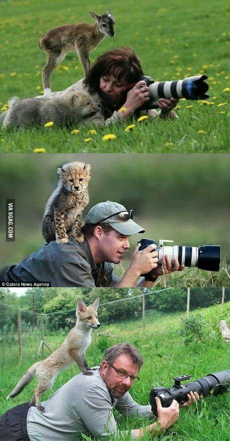 Cute animals being cute