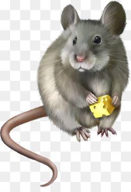 Rat Mouse Png Rat Mouse Transparent Clipart Free Download Hamster Rat Mouse Rodent Pet Pet Rat Pet Mice Animals Cartoon Animals
