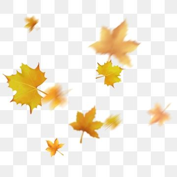 Floating Leaves Autumn Falling Yellow Autumn Clipart Floating Leaves Sycamore Leaves Blown By Autumn Wind Png Transparent Clipart Image And Psd File For Free Leaf Background Maple Leaf Drawing Fall Leaves