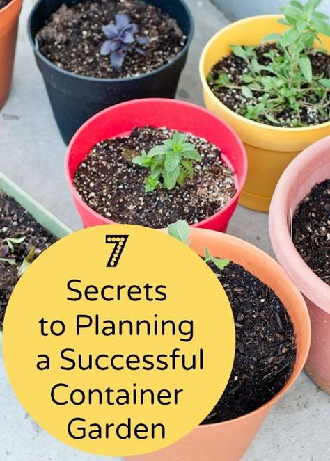 You don't have to have a huge garden to give nature a home. If you've all got a small patio then putting plants in containers is the way forward. Here's 7 secrets to successful container gardening to get you started #homesfornature