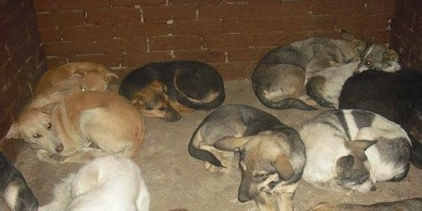 Protect the stray dogs of Moldova! | The government 'solved
