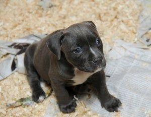 57 Ideas De Nala Dueños De Perros Uñas De Perros Perros
