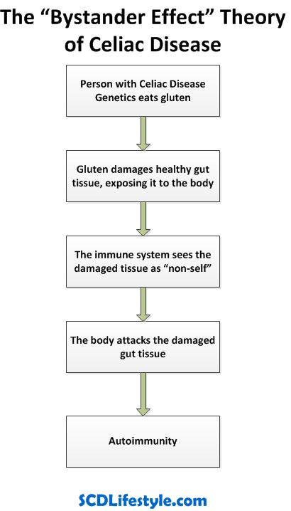 The Bystander Effect Theory of Celiac Disease... Find out what the latest research says about reversing Celiac Disease and where the gluten-free diet fits in...
