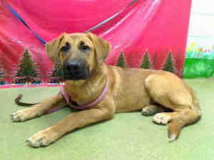 A416313 Brutus A416314 Zues Urgent Moreno Valley Animal Shelter Awesome Puppies Is An Adoptable German S German Shepherd Dogs Animal Shelter Shepherd Dog