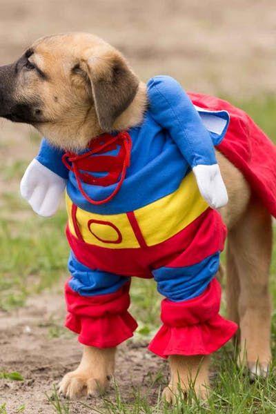 Dc Comics Dog Names Wag Dog Names Top Dog Names Batman Dog