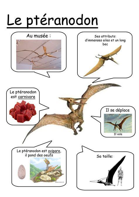 Fiche ptéranodon                                                       …