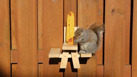 A squirrel picnic table. What else do you need? This wood feeder is the perfect size for your bushy tailed friends in your backyard.