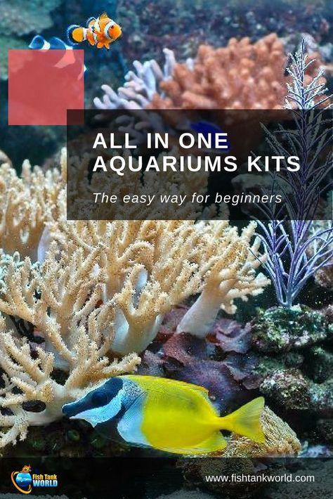 All In One Saltwater Aquarium Kit The 5 Best Starter Packages Of 2019 With Images Aquarium Kit Saltwater Aquarium Saltwater Aquarium Beginner