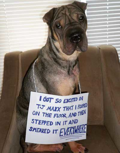 24 Of The Funniest Dog Shaming Signs That Will Make You Laugh