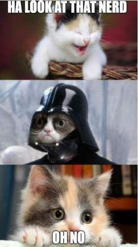 Cat Memes For Kids : memes, Ideas, Funny, Memes, Hilarious, Grumpy, Memes,, Humor,