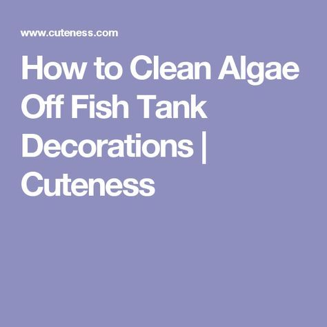 How To Clean Algae Off Fish Tank Decorations Cuteness Fish Tank Decorations Fish Tank Cleaning Fish