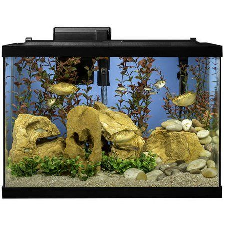 Pets 20 Gallon Aquarium Cool Fish Tanks Aquarium Fish Tank