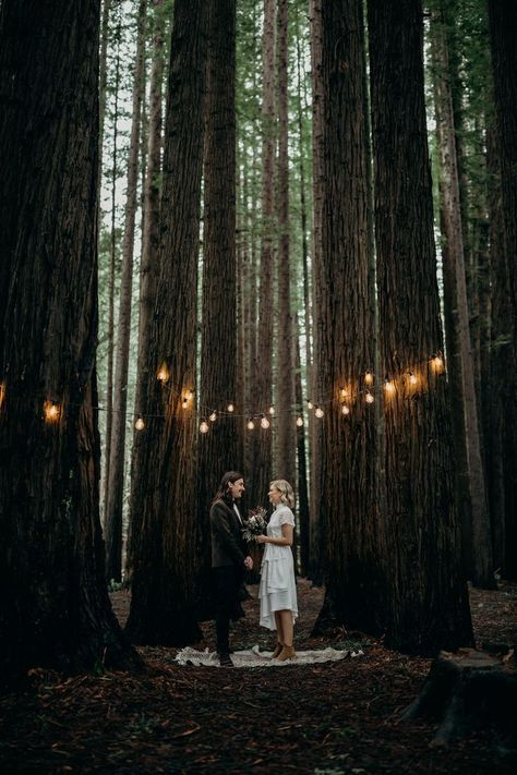 Warburton Redwood Forest makes for an awesome choi Paris Wedding, Elope Wedding, Wedding Shit, Magical Wedding, Wedding Songs, Wedding Gifts, Beach Wedding Photography, Wedding Photography Inspiration, Photography Poses