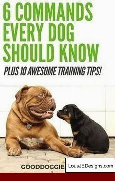 How To Potty Train A 1 Year Old Dog And Pics Of How To Train A Dog
