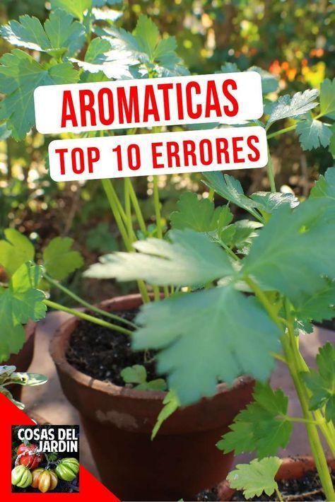 Top 10 Errores Más Comunes En El Cultivo De Hierbas Aromáticas Cosas Del Jardin Trees To Plant Regrow Vegetables Beautiful Gardens