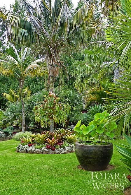Tropical Garden Ideas Nz lotus bowl at totara waters sub-tropical garden - garden stay