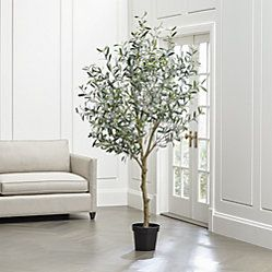 Faux 7 Fiddle Leaf Fig Tree Reviews Crate And Barrel Faux Olive Tree Indoor Olive Tree Olive Tree