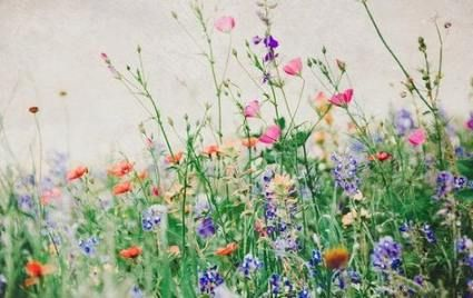 New Flowers Photography Nature Fields 32 Ideas Photography Flowers With Images Wildflowers Photography Fine Art Landscape Photography Flowers Photography