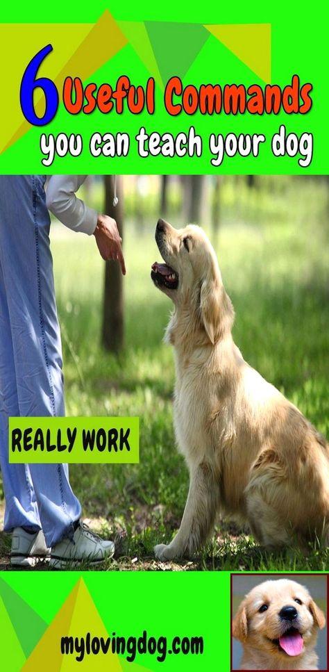 House Training A Puppy Uk And Dog Training Courses Tafe Qld Dog