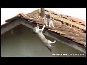 Video De Gatos Peleando Vídeo Gracioso Youtube Gatos Comportamiento De Los Gatos Gatitos Gif