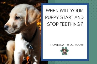 Puppy Teeth And Teething What To Expect The Happy Puppy Site Puppy Teething Teething Chart Happy Puppy