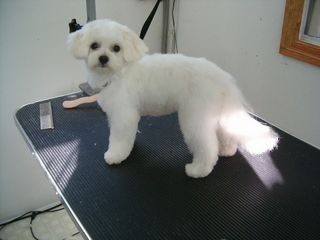 After Picture Diamond In The Ruff Pet Retreat 7621 Leslie Rd W