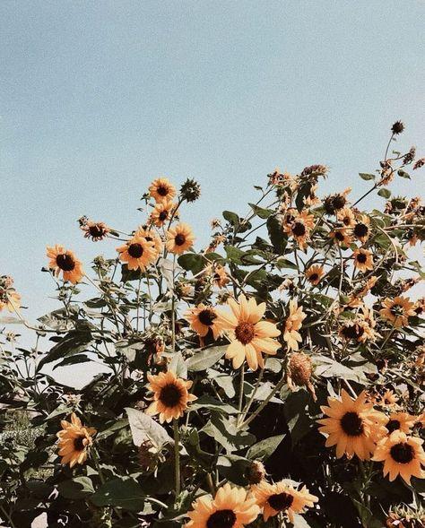 Hot Summer Days Latar Belakang Wallpaper Bunga Kolase Foto