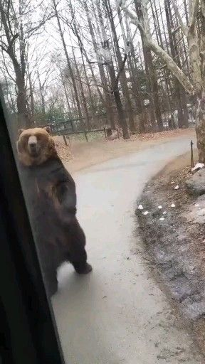 #funny#bear#foru#animalLovers#bearlovers#cool