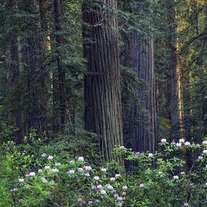 11 National Parks That Are America S Best Kept Secrets Tree Forest Tree National Parks