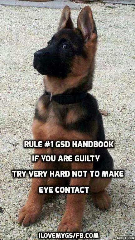 So True Lol Germanshepherd German Shepherd Memes German