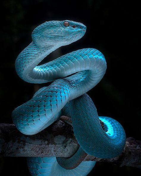 Snake At Night Wall Mural Cobras Coloridas Belas Cobras