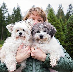 Pomapoo Breeder Washington State Northwest Doodle Dogs Pomapoo