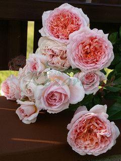 Candy Rain Floral Wreath Rose Floral