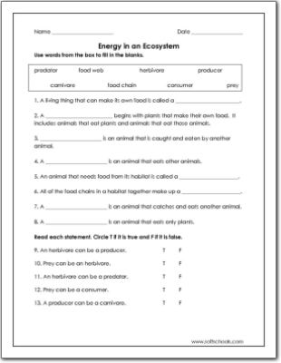 Energy In An Ecosystem Worksheet Kindergarten Subtraction Worksheets Free Science Worksheets Kids Worksheets Printables