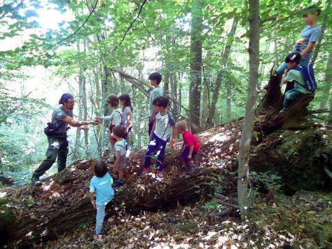 Festival Foresta in Festa - IV edizione presso Colle Verrico, Montereale