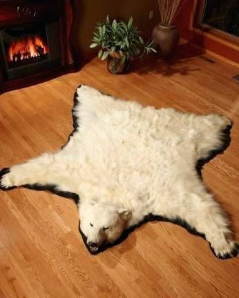 Colorful Real Bear Rug Photographs