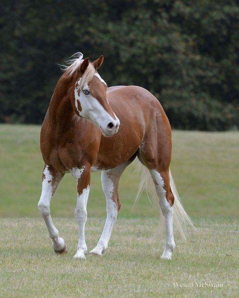 India's no 1 horse related magazine Www.horseblazemagazine .com