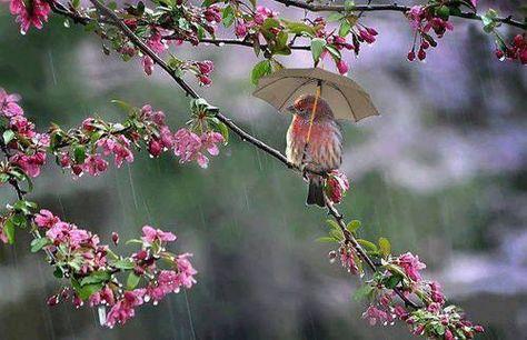 Tiny Bird with Umbrella.  So cute