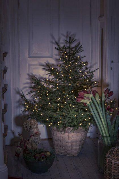 Led Baummantel Mit Ring Mit Globes In 2020 Beleuchtete Weihnachtsbaume Weihnachtsbaum Ideen Lichtdekoration