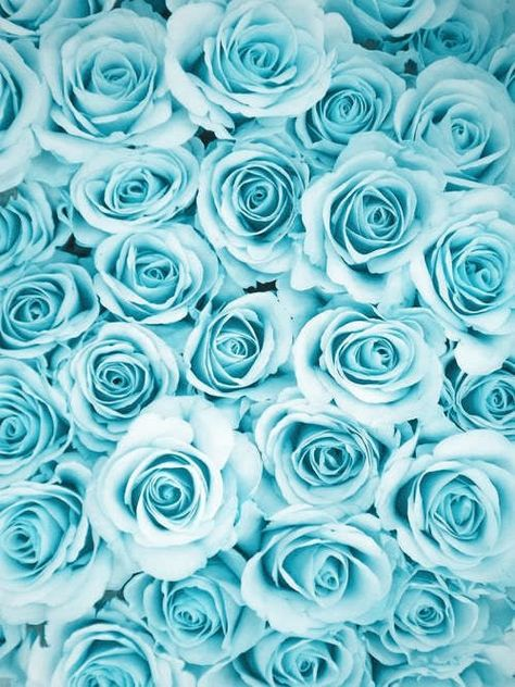 Image result for aqua roses and beautiful things and people animated