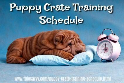A Puppy Crate Training Schedule Can Make Housebreaking Your Puppy