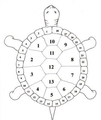 Turtles Are Considered To Represent The Ancient Wisdom Of The Earth With 13 Segments On Their Shells Thirteen Is In 2020 Turtle Shell Turtle Art Native American Art