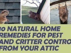 10 Natural Home Remedies For Pest And Critter Control From Your Attic Natural Home Remedies