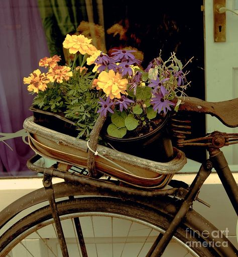 Antique bike and flowers in Galway, Ireland