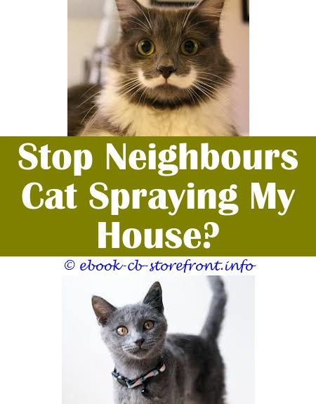 Simple And Ridiculous Tricks Can Change Your Life Cat Repellent Spray Recipe Diy Spray That Calms Cats Do Female Cats On En 2020 Aerosol Sensible Corrector