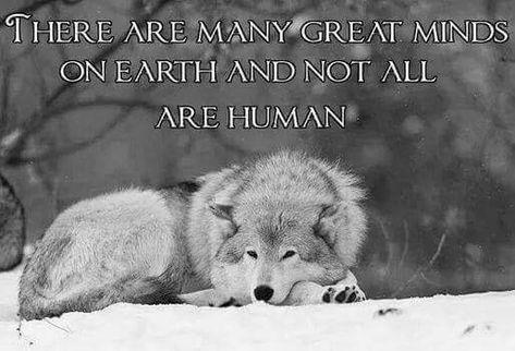 Wolf deutsch einsamer sprüche Noragami Zitate