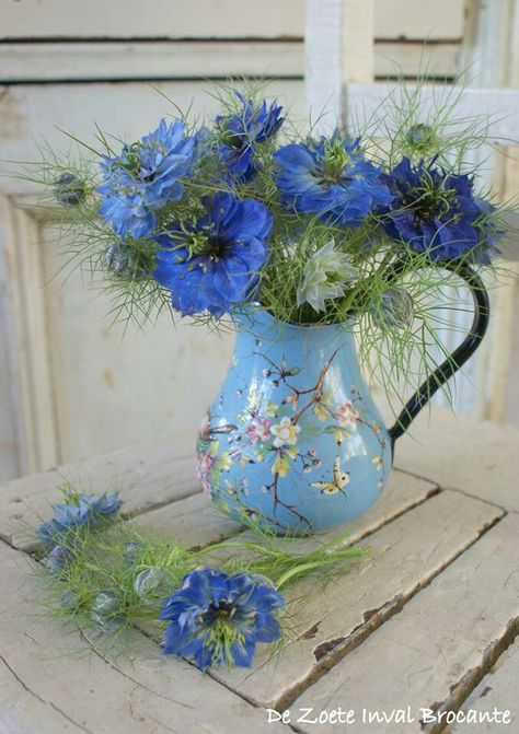 Blue love-in-the-mist