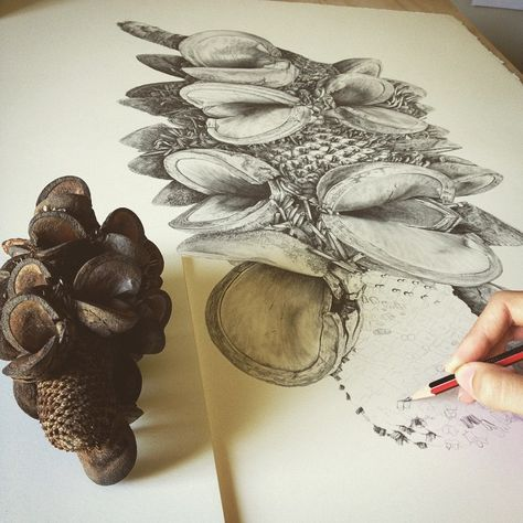 Banksia by Lauren Maysk. This is another enlargement of a banksi by a different artist. i love these enlargements