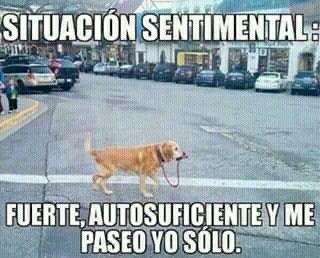 Situacion Sentimental Perro Lol Situacion Sentimental Memes De Animales Frases Humor