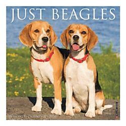 Willow Creek Press Animals Monthly Wall Calendar 12 X 12 Beagles January To December 2020 Beagle Willow Creek Wall Calendar